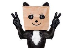 Σκυλί με την τσάντα εγγράφου στο κεφάλι Στοκ Εικόνες