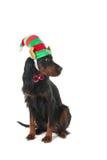 Σκυλί με το καπέλο νεραιδών Στοκ φωτογραφίες με δικαίωμα ελεύθερης χρήσης