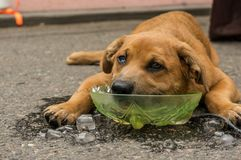 Σκυλί με το κεφάλι στον πάγο στοκ φωτογραφίες με δικαίωμα ελεύθερης χρήσης