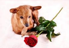 Σκυλί με το λουλούδι Στοκ εικόνα με δικαίωμα ελεύθερης χρήσης