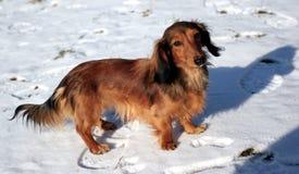 σκυλί μικρό Στοκ Εικόνες