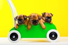 Σκυλί μωρών τριών griffon στο πράσινο καροτσάκι αγορών Στοκ Φωτογραφίες