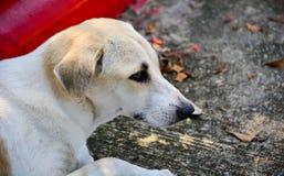 σκυλί μόνο Στοκ εικόνες με δικαίωμα ελεύθερης χρήσης