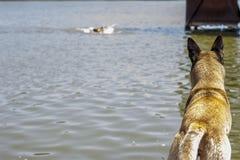 Σκυλί ναυπηγείων που περιμένει με κατανόηση να επιπλεύσει οικοδεσποτών στοκ φωτογραφίες
