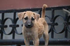 Σκυλί οδών στοκ εικόνες με δικαίωμα ελεύθερης χρήσης