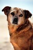 σκυλί οκνηρό Στοκ φωτογραφία με δικαίωμα ελεύθερης χρήσης