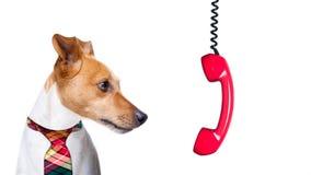 Σκυλί ουδετεροποίησης στην εργασία Στοκ Εικόνες