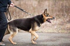σκυλί ο κύριός του υπάκουος στοκ εικόνες
