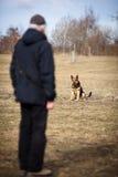 σκυλί ο κύριός του υπάκουος στοκ φωτογραφίες με δικαίωμα ελεύθερης χρήσης