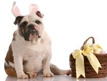 σκυλί Πάσχα καλαθιών Στοκ Εικόνες