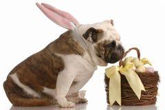 σκυλί Πάσχα Στοκ Εικόνες
