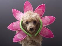 σκυλί Πάσχα Στοκ Εικόνα