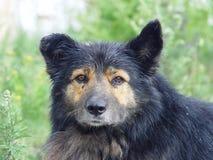 σκυλί παλαιό Στοκ Φωτογραφίες