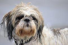 σκυλί παραλιών Στοκ Εικόνα