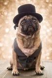 Σκυλί Παραμονής Πρωτοχρονιάς στοκ φωτογραφία με δικαίωμα ελεύθερης χρήσης