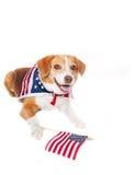 σκυλί πατριωτικό Στοκ εικόνα με δικαίωμα ελεύθερης χρήσης