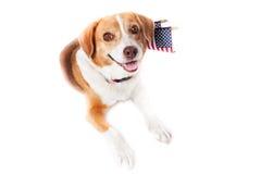 σκυλί πατριωτικό Στοκ Εικόνα