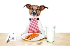 σκυλί πεινασμένο Στοκ Εικόνα
