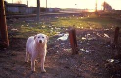 σκυλί περιπλανώμενο Στοκ εικόνες με δικαίωμα ελεύθερης χρήσης