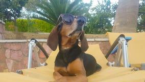 Σκυλί που έχει τη διασκέδαση σε ένα μόνιππο longue που φορά τα γυαλιά ηλίου Μια ευτυχής θερινή στιγμή απόθεμα βίντεο