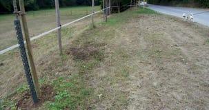 Σκυλί που αποφλοιώνει και που περπατά τα πράσινα δέντρα στο χωριό των πράσινων εδαφών της Γερμανίας των όμορφων υποβάθρων και των απόθεμα βίντεο