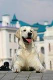 σκυλί που βρίσκεται άσπρ&om Στοκ Φωτογραφίες