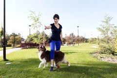 Σκυλί που εκπαιδεύει την υπαίθρια πρακτική πάρκων σχέσης επαγγελματικών χειριστών που διδάσκει τον αυστραλιανό ποιμένα υπαίθριο στοκ εικόνες με δικαίωμα ελεύθερης χρήσης