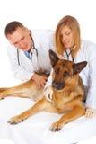 σκυλί που εξετάζει δύο κ στοκ φωτογραφία