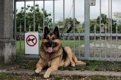 Σκυλί που επιτρέπεται κανένα στοκ φωτογραφία