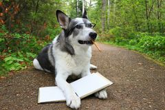 Σκυλί που κρατά ένα βιβλίο με ένα μολύβι στο στόμα του Στοκ εικόνες με δικαίωμα ελεύθερης χρήσης