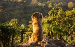 Σκυλί που παρατηρεί τη συνεδρίαση τοπίων σε έναν βράχο στοκ φωτογραφίες