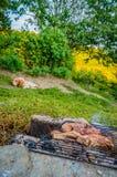 Σκυλί που περιμένει BBQ Στοκ Φωτογραφίες