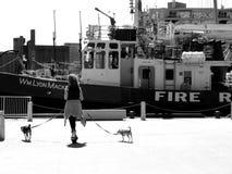 Σκυλί που περπατά στο Τορόντο σε γραπτό στο λιμενικό μέτωπο στοκ φωτογραφία με δικαίωμα ελεύθερης χρήσης