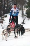 σκυλί που συναγωνίζεται donovaly το έλκηθρο Σλοβακία Στοκ φωτογραφία με δικαίωμα ελεύθερης χρήσης