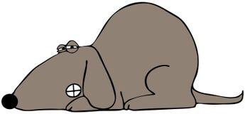 Σκυλί που τα δόντια του Στοκ εικόνα με δικαίωμα ελεύθερης χρήσης