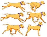 Σκυλί που τρέχει και σύνολο ζωτικότητας περπατήματος διανυσματική απεικόνιση