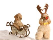 σκυλί που τραβά το έλκηθρο του Rudolph στοκ φωτογραφία με δικαίωμα ελεύθερης χρήσης