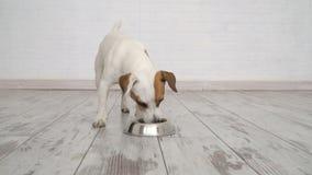 Σκυλί που τρώει τα τρόφιμα από το κύπελλο απόθεμα βίντεο