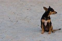σκυλί που χάνεται Στοκ εικόνες με δικαίωμα ελεύθερης χρήσης