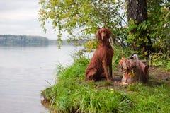 Σκυλί πυροβόλων όπλων πλησίον στο κυνηγετικό όπλο και το τρόπαιο, υπαίθρια Στοκ Φωτογραφίες