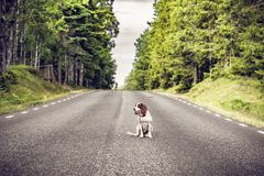 Σκυλί σε έναν κενό δρόμο ασφάλτου στοκ φωτογραφία με δικαίωμα ελεύθερης χρήσης