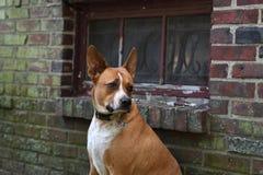 σκυλί σοβαρό στοκ φωτογραφίες