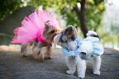 σκυλί στα ενδύματα στοκ φωτογραφία με δικαίωμα ελεύθερης χρήσης