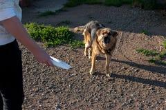 Σκυλί στην αλυσίδα Το σκυλί προστατεύει το σπίτι ταΐστε το κακό σκυλί Στοκ φωτογραφία με δικαίωμα ελεύθερης χρήσης