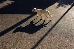 Σκυλί στην οδό στοκ φωτογραφία με δικαίωμα ελεύθερης χρήσης