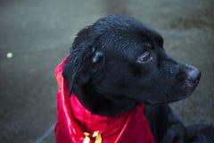 Σκυλί στη βροχή στοκ εικόνες
