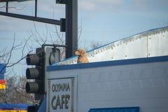 Σκυλί στη στέγη Στοκ φωτογραφία με δικαίωμα ελεύθερης χρήσης