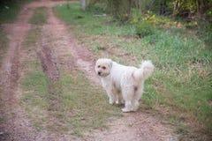Σκυλί στον τρόπο Σκυλί οδών στοκ εικόνα