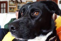 σκυλί στοχαστικό Στοκ φωτογραφία με δικαίωμα ελεύθερης χρήσης