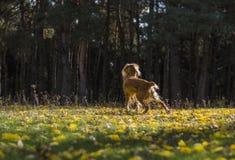 Σκυλί στο δάσος φθινοπώρου Στοκ εικόνα με δικαίωμα ελεύθερης χρήσης